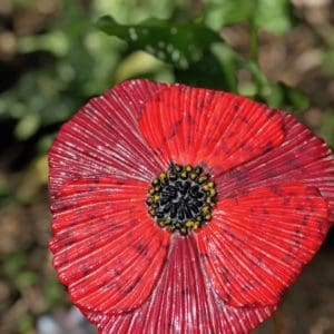 glass garden poppy
